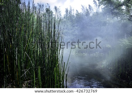 Misty bamboo forest morning fog in dense tropical forest - stock photo