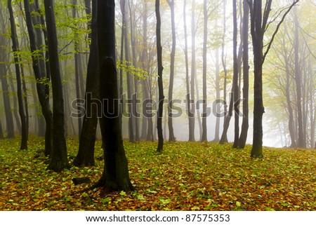 Misty beautiful autumn forest; the mountains. - stock photo