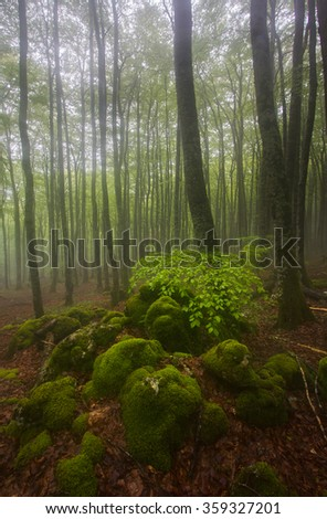 Misty beech wood in Urbasa (Navarre)