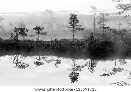 Misty bog landscape with pool and reflections - stock photo