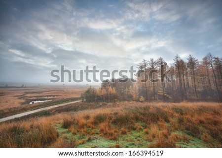 misty clouded autumn morning over swamps and forest, Duurswoude, Friesland, Netherlands