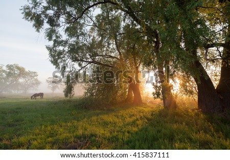 Misty dawn at the lake. - stock photo