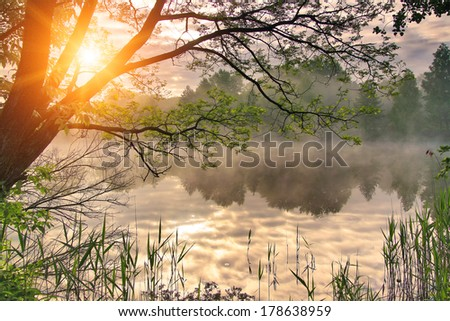 Misty dawn over the spring lake - stock photo