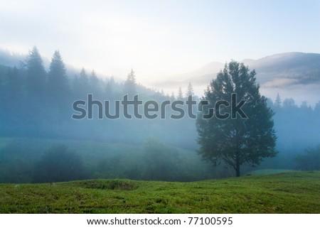Misty daybreak in summer Carpathian mountain, Ukraine (with mist clouds). - stock photo