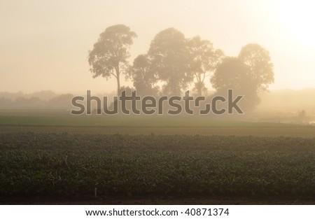 Misty farm at sunrise - stock photo