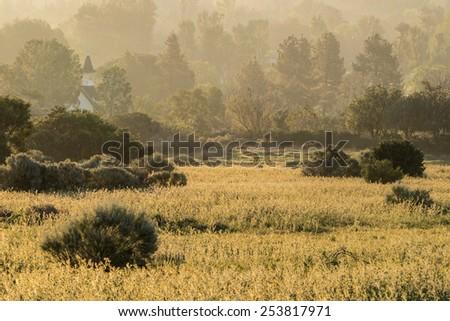 Misty Fiddleneck flower meadow morning in Los Angeles's San Fernando Valley.   - stock photo