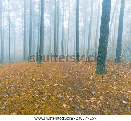 misty foggy forest - stock photo