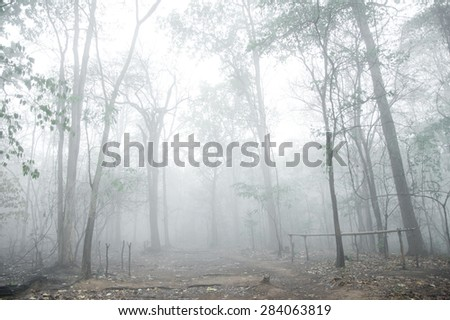misty forest - stock photo