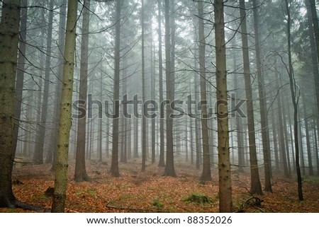 misty forest - stock photo