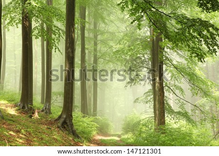 Misty forest after the rain in the sunshine. - stock photo