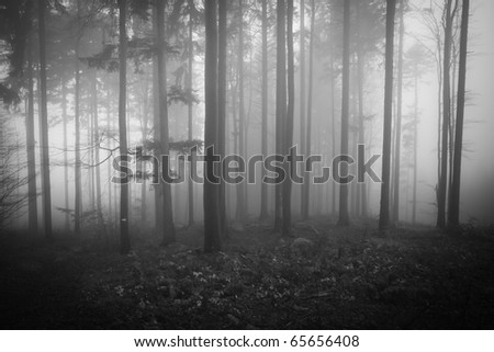 misty forest at dawn in the autumn - stock photo