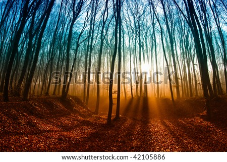 Misty forest at dawn, the rising sun. - stock photo