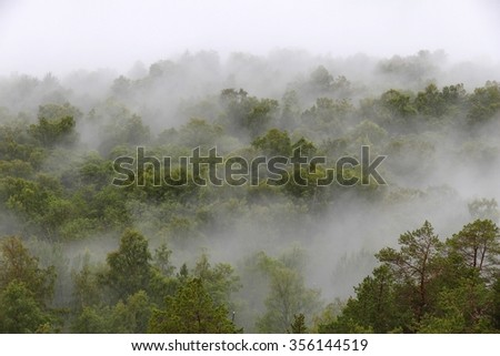 Misty forest in Norway - spooky mist landscape. - stock photo