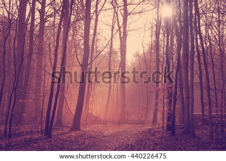 Misty forest in the morning sunrise with tall trees - stock photo