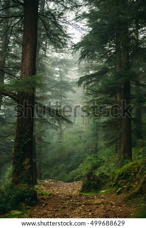 Misty forest in the mountains. Foggy forest in Dharamkot, India