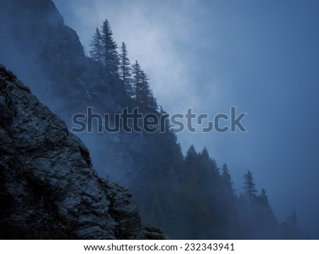 Misty forest on the mountain slope in a nature reserve. Alps - stock photo
