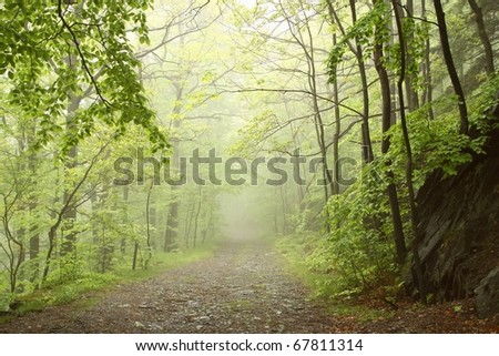 Misty forest path among the fresh spring leaves. Photo taken in May. - stock photo