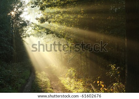 Misty forest path at dawn on the first day of autumn. - stock photo