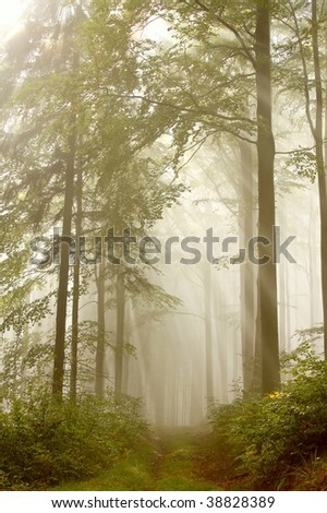 Misty forest path with the sun shining between the trees. Photo taken in early autumn. - stock photo