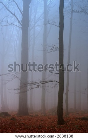 misty forest photographed early morning - stock photo