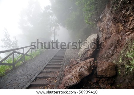 Misty forest road - stock photo