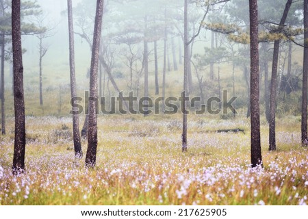 Misty forest with flowers on the ground - stock photo