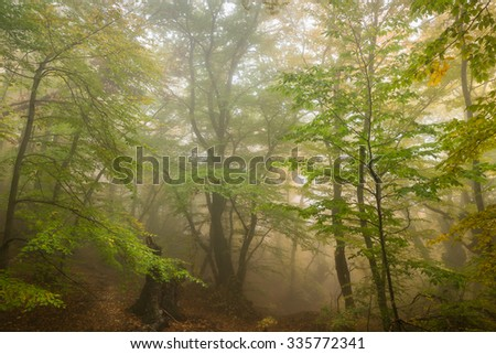 Misty  forest with fog in the autumn - stock photo
