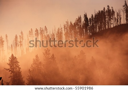 Misty forest with sunrise Yellowstone National Park, Wyoming, United States. - stock photo