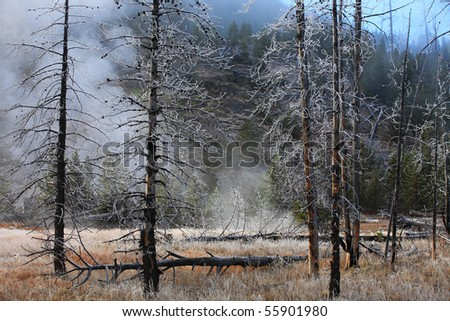 Misty forest  Yellowstone National Park, Wyoming, United States. - stock photo