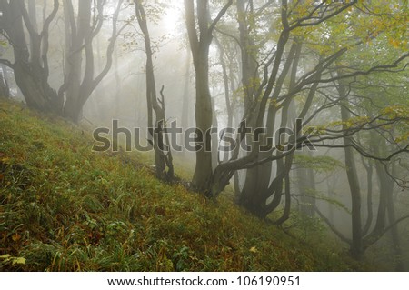 Misty forrest in the fall