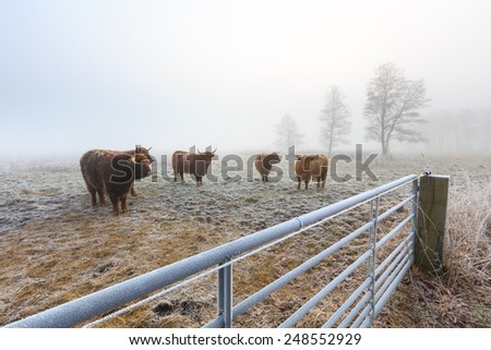 Misty frozen landscape of farmland in winter time in Holland - stock photo