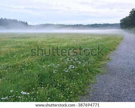 Misty green meadow with blooming wild flowers. Scandinavian nature in summer. - stock photo