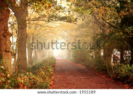 Misty journey ahead. A quiet lane on a beautiful misty autumn morning. - stock photo