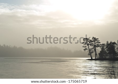 Misty landscape with trees - stock photo