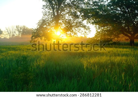 Misty meadow spring at sunrise - stock photo