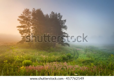 Misty Morning and Pines at the Meadow