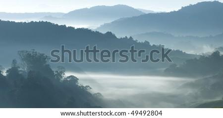 Misty morning at tea plantation farm - stock photo