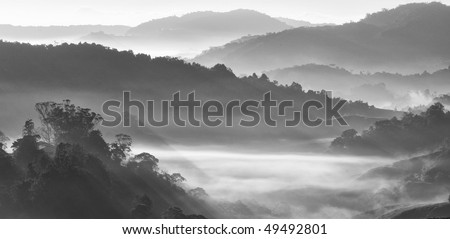 Misty morning at tea plantation farm in black and white - stock photo