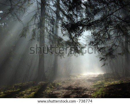 Misty morning deep in the forest, europe,Bialowieza - stock photo