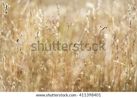 Misty morning field close-up. Grasses with morning dew. - stock photo