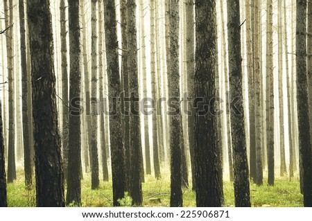Misty morning forest - stock photo