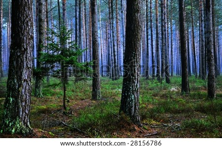 Misty morning forest with powerful colors - stock photo
