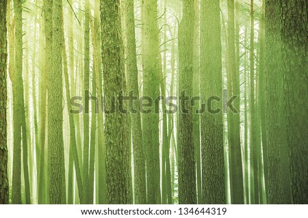 Misty morning in a forest - stock photo