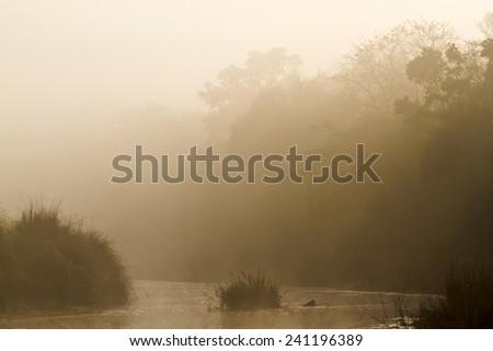 Misty morning in jungle river in Nepal - stock photo