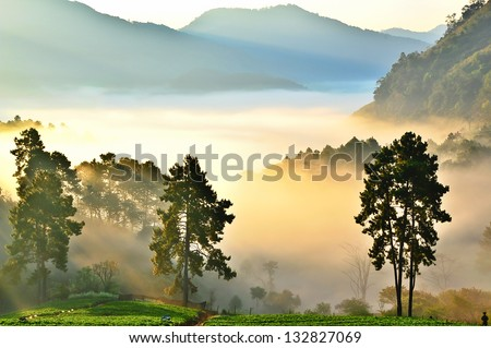 misty morning in strawberry garden at doi angkhang mountain, chiangmai : thailand - stock photo