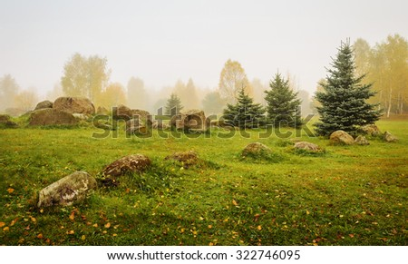 misty morning in the park with stones, firs and birches - stock photo