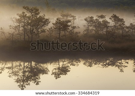Misty morning in the swamp with water reflection  - stock photo