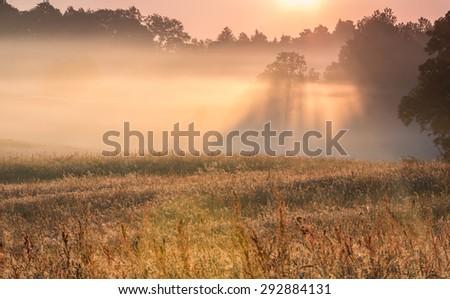 Misty morning landscape of Pomerania, Poland - stock photo