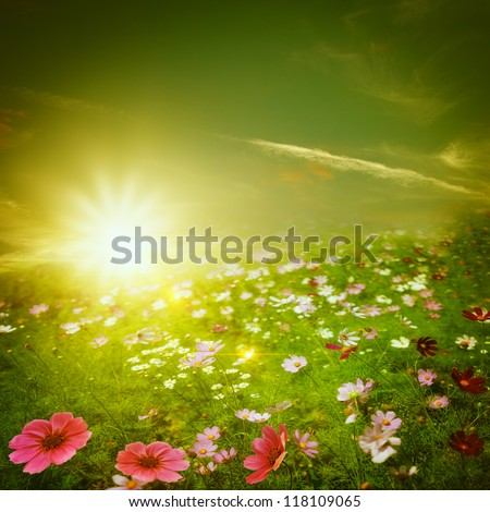 Misty morning on the meadow. Abstract natural backgrounds for your design - stock photo