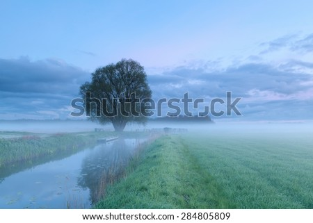 misty morning over tree by river - stock photo